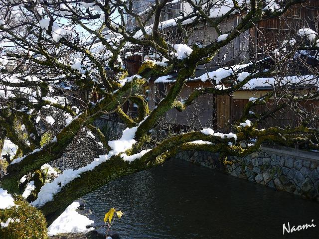 京都冬⑪P1110505-20150103